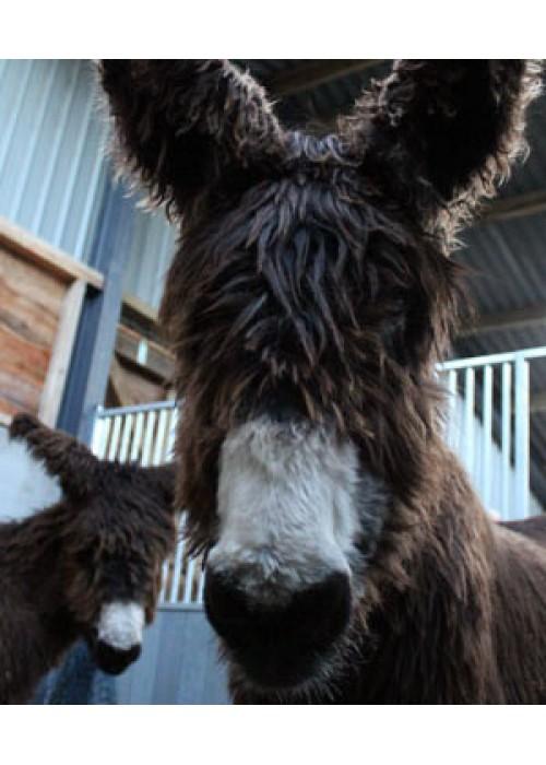 Donkey Encounter