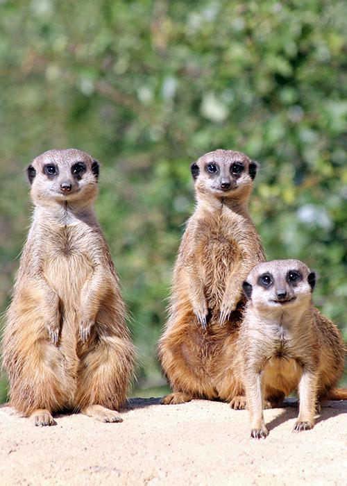 Zoo Keeper Experience