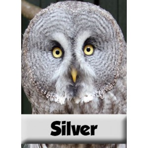 Silver Animal Adoption
