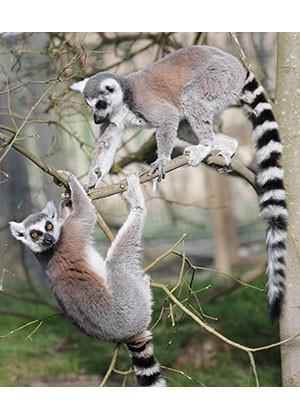 Virtual Zoo Education Lessons
