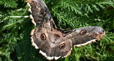 Moth Night - 22nd July