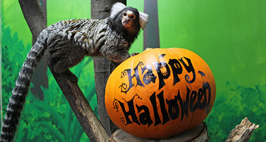 Halloween Half-Term
