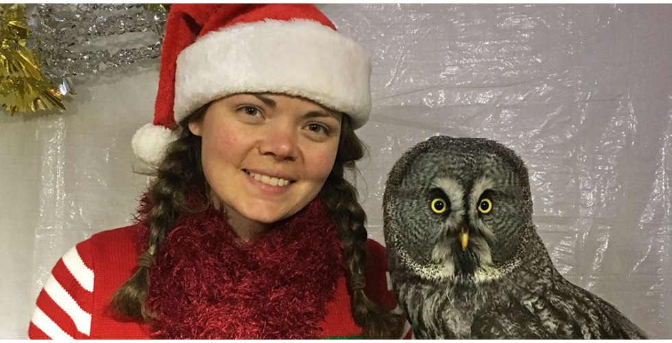 Santa's Christmas Owls are back!